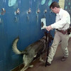 10/27/99---Rusk County Sheriff's officer Stephen Strong guides his K9 Lars through the hallway lockers at West Rusk High School. Lars, the county's new law enforcement dog, has been used heavily at schools for drug checks and educational programs. bahram mark sobhani