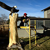 Lueb Popoff, of Hollow Log Tree Carving and Sculpture, prepares to attach his eagle sculpture to a dead cottonwood tree in the yard at 631 Independence Dr. in Longmont on Monday, Jan. 7, 2013. For more photos and a video visit www.TimesCall.com.  (Greg Lindstrom/Times-Call)