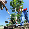 Globe/T. Rob Brown<br /> Ozark Nursery laborers John Shreve (left) and Curt Collins plant one of 67 trees delivered to Campbell Parkway Tuesday morning, July 9, 2013. The full project includes a total of 1,530 native Missouri trees about 12 to 14 feet tall, including sycamores, birch, bur oak, red oak and a couple maple varieties.