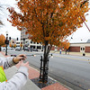 City of Joplin employees Gary Hatfield (left), signing & traffic technician, and Tyler Ebbs, street department laborer, put up seasonal lights in trees Wednesday afternoon, Nov. 20, 2013, along Main Street in downtown Joplin. Globe | T. Rob Brown