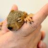 20140821_SQUIRRELS_2733