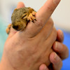 20140821_SQUIRRELS_2738
