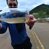 15EP Flood Trout.jpg A trout seems disoriented in a bottle at the YMCA of the Rockies on Saturday. Fish were stranded on streets in the area after the flood water receeded.