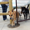 "Alice, front, Jackie and Brewster squeeze anxiously past the gate into the park on Friday, Aug. 24, at the Valmont Dog Park in Boulder. For a video about the new park go to  <a href=""http://www.dailycamera.com"">http://www.dailycamera.com</a><br /> Jeremy Papasso/ Camera"