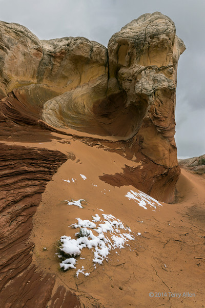 Fresh snow on desert plants, White Pocket, Vermillion Cliffs NM, Arizona
