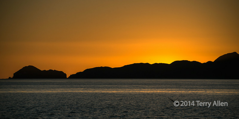 Moment before sunrise with seabird, Isla Carman, Sea of Cortez, Baja, Mexico