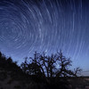 Star Trails Over the North Rim of the Grand Canyon at Crazy Jug Point
