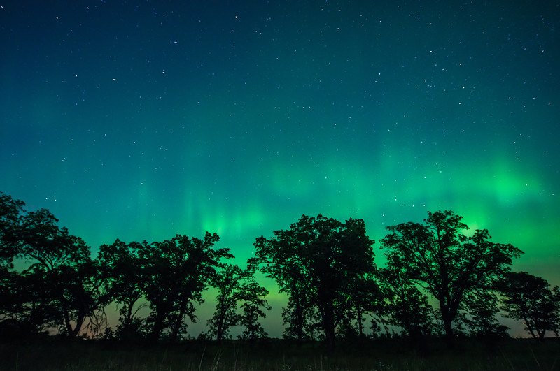 Auroras over Oak trees