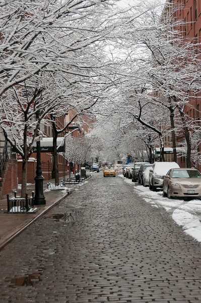 Snow covered trees in a street in New York City, New York
