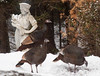 Wild Turkey in my Phippsburg, Maine coastal garden with a garden statue in the snow