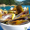 Green Lipped Mussels on the Seafood Odyssea - Marlborough, New Zealand