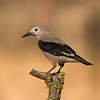 clark's nutcracker cabin lake oregon