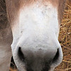 "There is Nothing ""Soft"" About the Noise that Comes Out of the ""Soft"" Nose of a Donkey."
