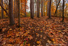 Beaver Creek Reservation - Oct192012_4619 - Amherst, Ohio