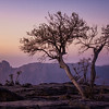 Jabal Shams Trees