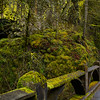Beautiful moss at Oneonta Gorge
