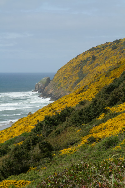Wildflowers on Oregon Coast