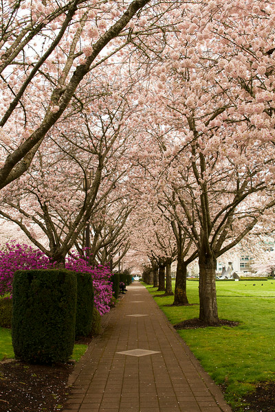 Early Spring at State Capital Park, Salem
