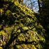 Moss and tall shadows near Shellburg Falls, Salem