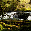 Oregon forest and stream - Silver Falls National Park