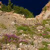Floer field on sttep bank down into Crater Lake NP, Oregon