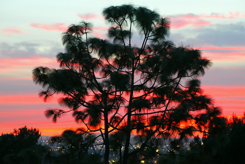Brandon O'Brien, City lights sunset through tree