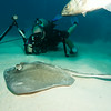 Rod and stingray.