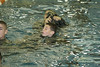 20131116-EOT-Water-Survival (188)
