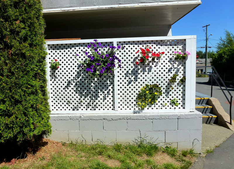 Lattice and Petunias 027