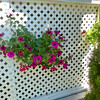 Lattice  and Petunias 007