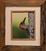 Red-bellied Woodpecker Profile - Framed in old reclaimed oak barn wood - image 10 x 8 outside 18 x 17