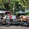 horse-carriage-1