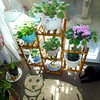 Plant stand in patio window