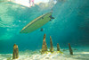 Stand Up Paddle Boarding over the Cypress Knees - Underwater Photography by Pat Bonish