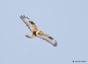 DSC_1748 Rough-legged Hawk Feb 26 2015