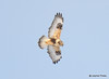 DSC_1740 Rough-legged Hawk Feb 26 2015