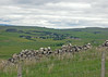 Day 4 - A walk from Elsdon: On our way back to the other side of Elsdon.
