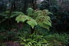 Ferns, Descanso Gardens