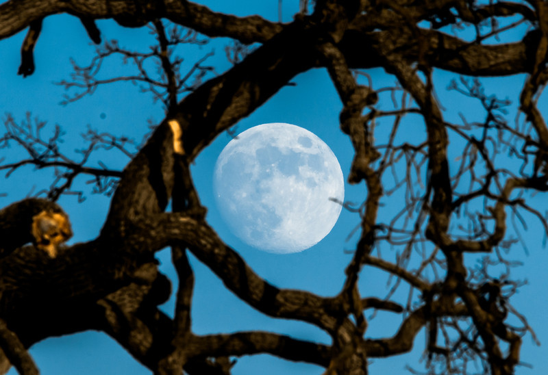Nikon D800E October Malibu Moon, Nature, Landscape, & Wildlife Photos!