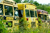Week 37 - Mona - Out of Place - Schoolbus graveyard!