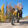 Jack fits right in with the Aspen fall colors in Dillon, Colorado.