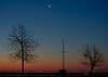 crescent moon, Venus, tree silhouettes, during eastern predawn sky