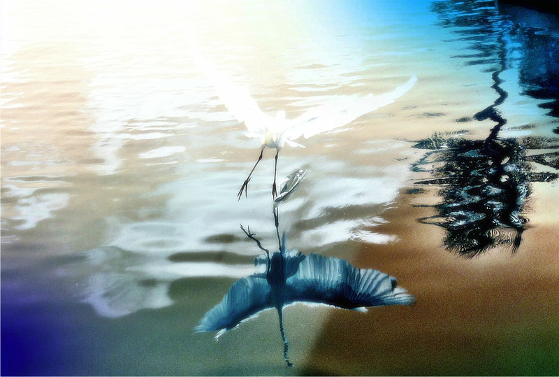 Bird_cyanotype less 1mb