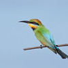 Rainbow Bee-eater, Seven Mile Beach, New South Wales.<br /> Nikon D700 with Nikon ED AF 300mm f/4