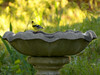 A little goldfinch, keeping his eye on me...<br /> Another from the Domicile of Nottingham.
