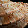 Cassis Rufous Seashell from Zanzibar<br /> Close up detail shot of the gentle curve and textures of the orange patterned shell