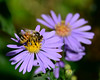 082014<br /> Kennett Square Bee
