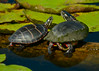 081014<br /> Harford Glen Turtles<br /> Abingdon, MD