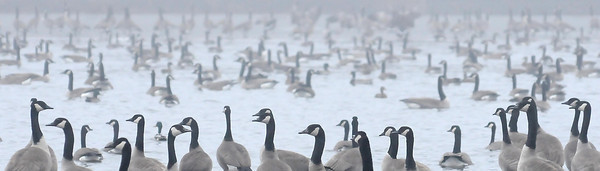 John Cross How foggy was it on Tuesday? So foggy that even the flock of geese congregating on Lake Dorothy were grounded. The heavy fog is expected to give way to a fresh coating of snow across much of Minnesota today.