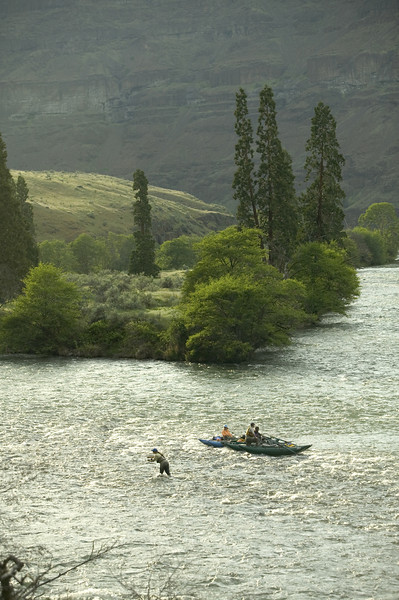 (MR) Fly fishing off a rock bar on the lower Deschutes River near Maupin Oregon.